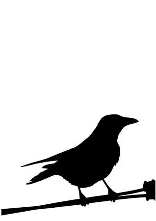 misfortune: a silhouette of a bird isolated on white