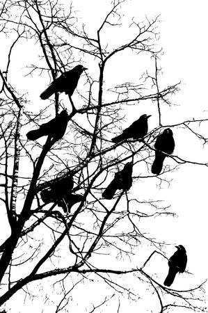 corbeau: une silhouette d'un oiseau isol� sur blanc Illustration