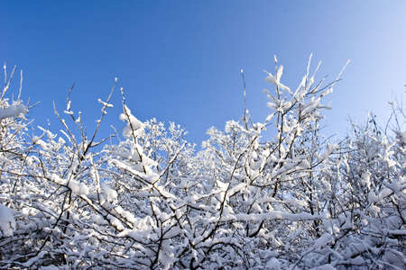 fruit orchard in winter covered in snow photo