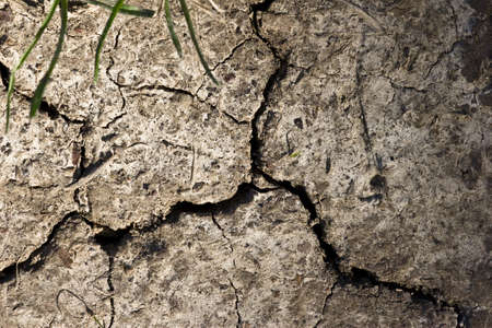 parched: parched earth background
