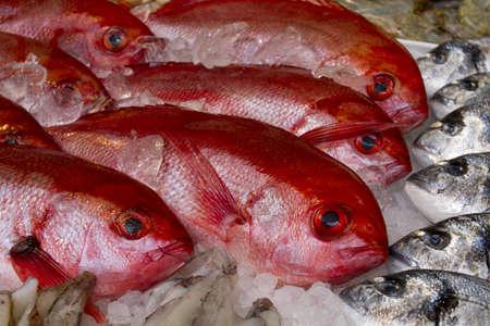 fresh fish on ice