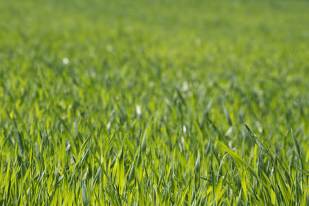 lush green grass background Stock Photo
