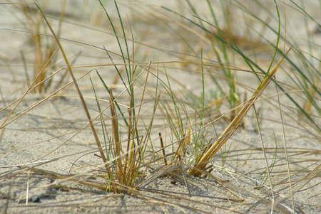 Grass and beach Stock Photo