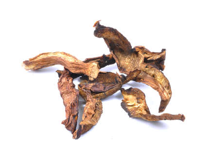 dried mushrooms photo