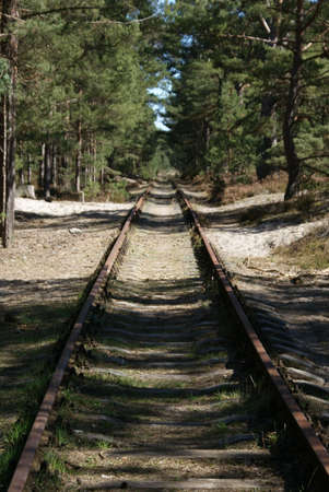 forest railway: Railway track in the forest Stock Photo