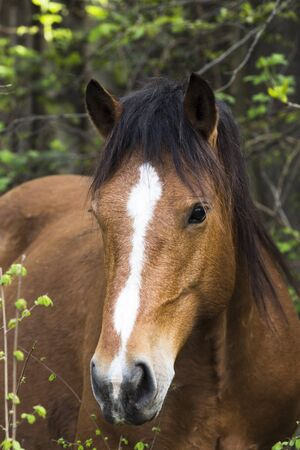 trot: horse on freedom