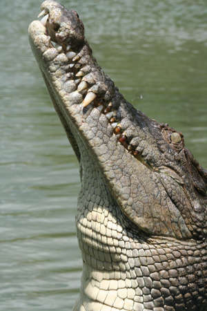 Hungry Crocodile photo