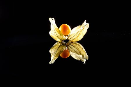 Physalis individually with reflection in black glass