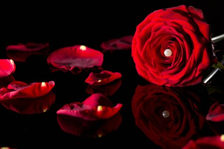 perle: Rose mit Perle in Nahansicht Stock Photo