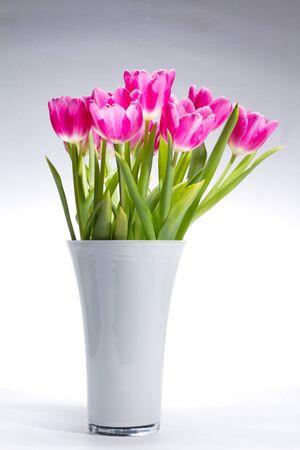 pflanze: Tulpenstrau� in wei�er Vase vor verlaufendem Hintergrund Stock Photo