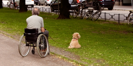 A wheelchair man walking his dog in one of the city Editorial