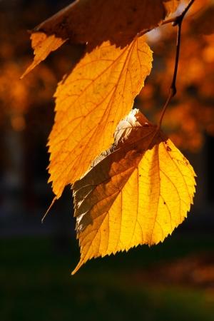 Autumn, leaves Stock Photo