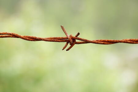 barbed wire isolated: Rusty barbed wire isolated on green background.