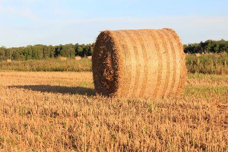 Circular straw bale on a field. Stock Photo