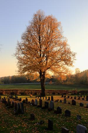 Autumn season at the cementary.