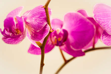 petal: flowers, orchid, isolated, flower, nature, plant, petal