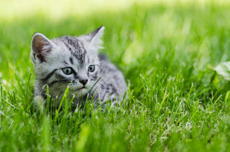 A cute kitten learns to take the first independent steps in the open air