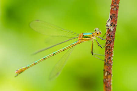 A beautiful dragonfly on a summer day sits on a green leaf with a colorful background Stock Photo