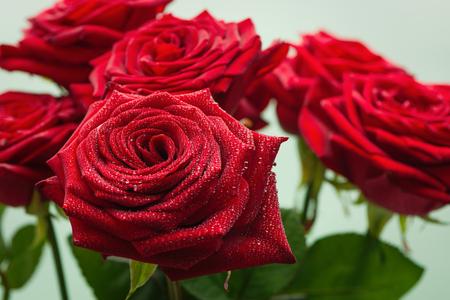 Красные розы с каплями воды Фото со стока