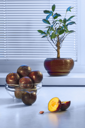 Large dark plums in a glass plate on a table and a ficus in a ceramic pot on a window sill against the background of a window with a frame from plastic and blinds