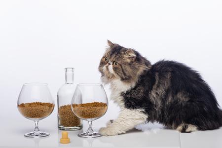 Черно-белый персидский кот, коньяк с бутылкой и два стакана, наполненные сухим кормом для кошек Фото со стока