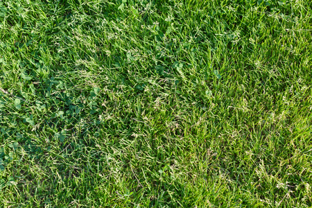 Background from a fresh juicy bright green grass