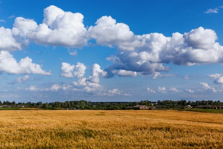 Landscape with beautiful clouds in the blue sky and ripe ears in the field