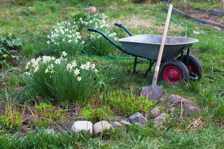 Shovel and the cart on a garden site with flowers Standard-Bild