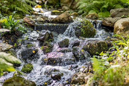 Stream of clean and crystalline water of a river that flows between the stones with moss forming a small waterfall surrounded by green vegetation, sunny day in nature