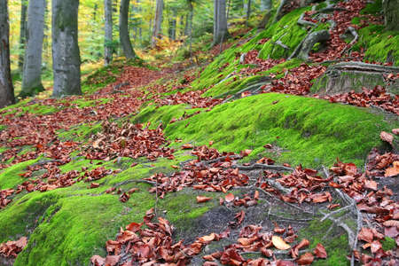 Old forest in autumn colors. photo