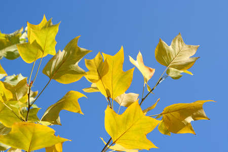 Autumn tree with colorful leaves Stock Photo - 13898182
