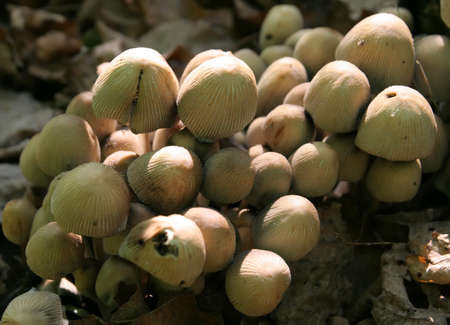 Mushrooms in the autumn forest. Stock Photo - 15260804