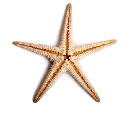 Starfish isolated on white background. Фото со стока