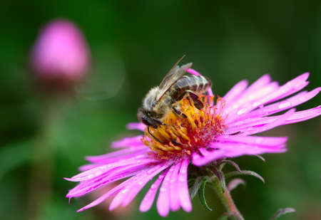 Small bee on the flower