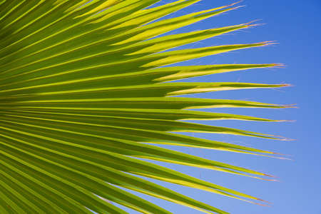 Palm leaf on the sky background photo