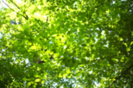 Green foliage in the forest blurred background