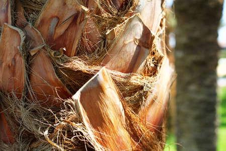 Palm tree bark close up