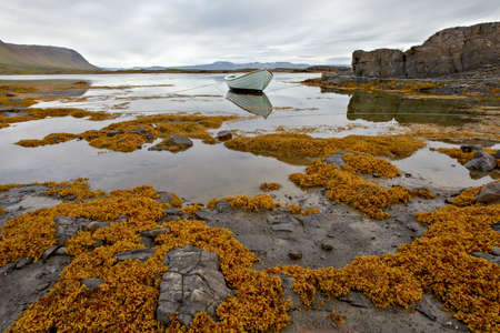 White boat in the sea with reflection in the water on a beach with yellow algae and surrounded by mountains in a fjord