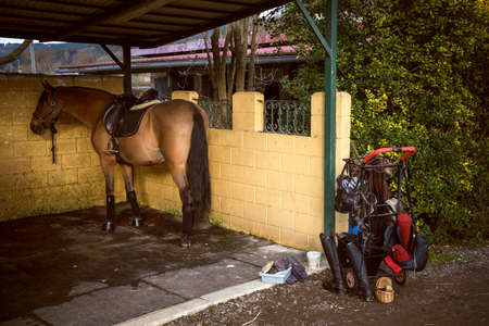 Horse tied up in a stable ready to go riding and you can see a cart with accessories and black riding boots Stockfoto