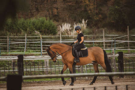 Female rider on horseback in the riding school