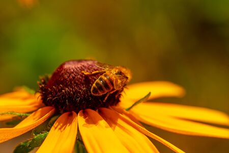 Macro photography of insects on flowers and plants. Cool