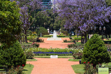 Rose Park in the forest of Palermo with over a thousand roses in Buenos Aires Argentina