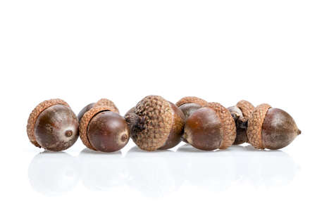 Ripe acorns on a white background Stock Photo
