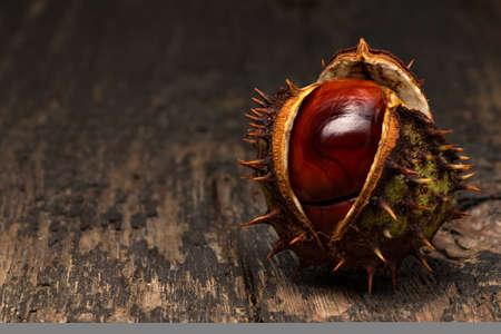 Ripe chestnut (Castanea) in prickly shell Stock Photo