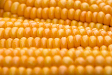 zea mays: Gold yellow ripe maize (Zea mays) close-up Stock Photo