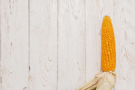 zea mays: Gold yellow ripe corn on vintage wooden table (zea mays) close up Stock Photo