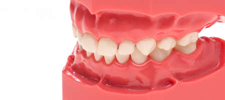 Dissecting teeth, teeth model for training and perception