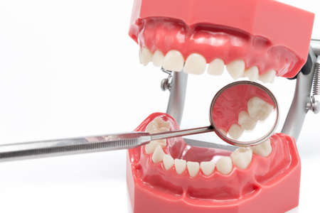 probes: Dissecting teeth, teeth model for training and perception