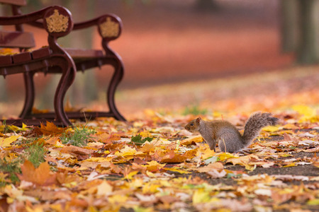 Squirrel at a bench in an autumn park