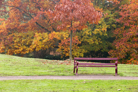 Convenient bench in a park with autumn trees
